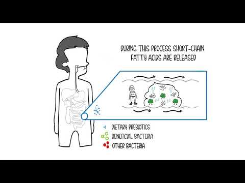 BENEO Whiteboard Video Prebiotic Effect