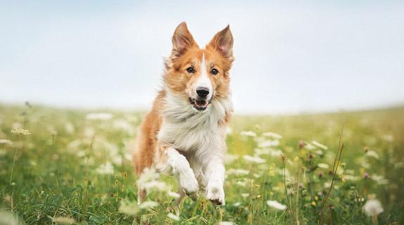 BENEO animal nutrition dog food