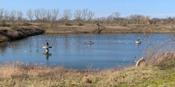BENEO transforms settling pond into wildlife haven