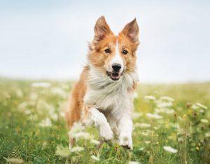 Ingredientes de alimentos para mascotas con beneficios nutricionales