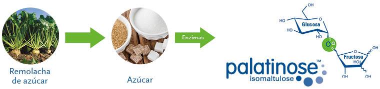Síntesis de la palatinosa (isomaltulosa).