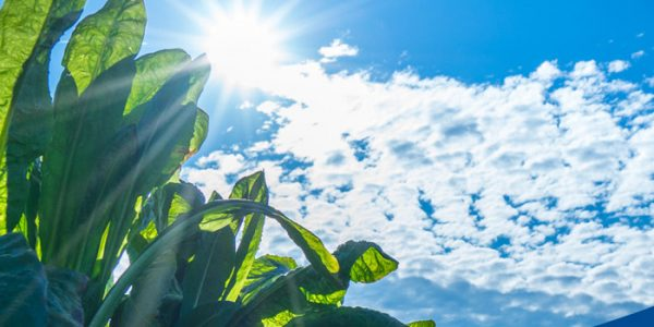Sustainability – it's part of BENEO's DNA