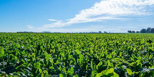 BENEO expands portfolio with new organic ingredients.