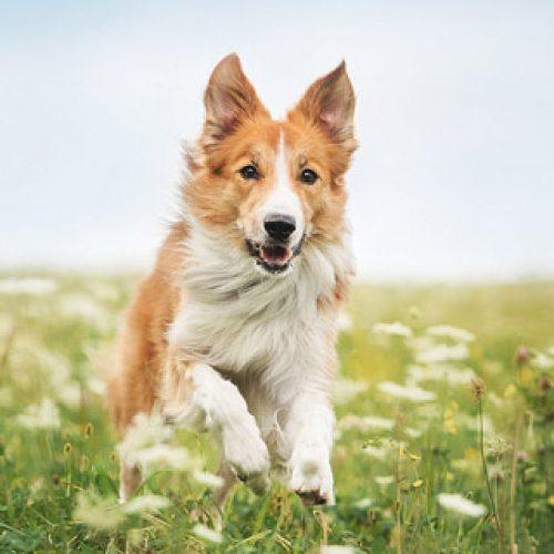 Nutricion animal alimentos para mascotas