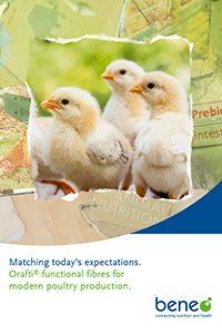 Folleto Fibras Orafti® para la producción moderna de aves de corral.