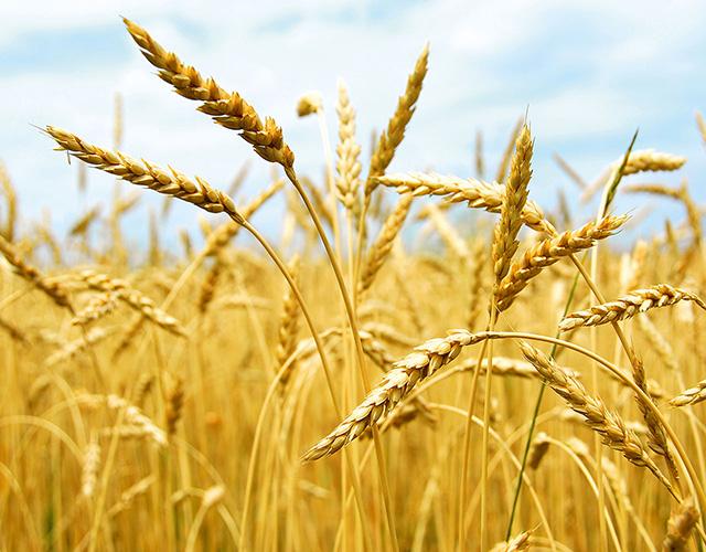 BENEO nutricion animal Proteínas funcionales